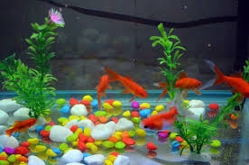 significance of a fish tank to your health bristol info inc