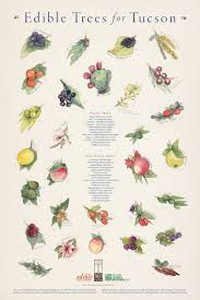 edible native plants edible trees for tucson poster u2014 edible baja arizona magazine