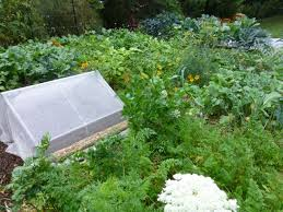 a look back at the fall vegetable garden u2014 veggie gardening tips