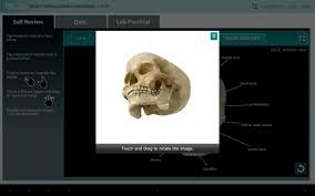 practice anatomy lab images learn human anatomy image