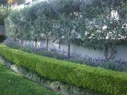 shrubs for privacy fence backyard fence ideas