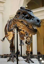 thanksgiving point museum of curiosity best 20 dinosaur museum ideas on pinterest indiana