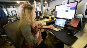 relation au bureau c est mon boulot amener chien au bureau cela aplanit les