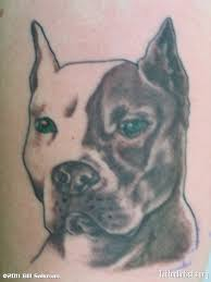 pit bull tattoo art design photos pictures and sketches
