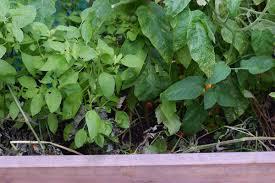 vermont garden journal composting in place vermont public radio