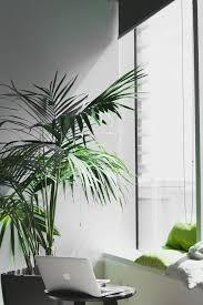 Indoor Plant For Office Desk Creating The Best Office Desk Greenery For Desk Jockeys U2013 Plants