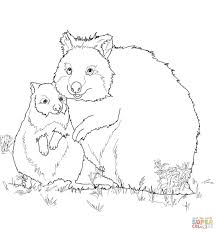 mom and baby quokka coloring page free printable coloring pages