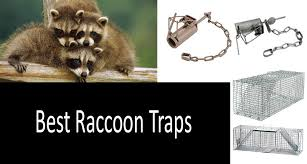 How To Get Rid Of Raccoons In Backyard Top 7 Raccoon Traps That Will Surely Help You Catch A Raccoon
