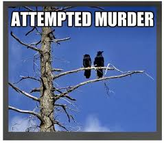 Attempted Murder Meme - 760 best funny images on pinterest hilarious chistes and a quotes