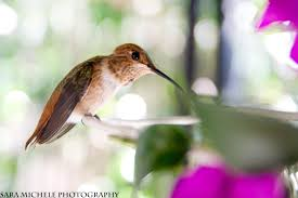 amazon com fastest things on wings rescuing hummingbirds in