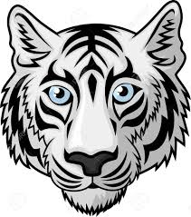 white tiger clipart tiger mascot pencil and in color white tiger