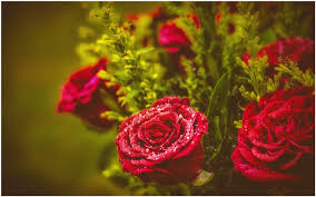fresh flowers buds and roses fresh flowers wallpaper buds and roses fresh