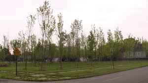 hantz woodlands u2013 a tree grows in detroit