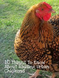 backyard chickens archives artzycreations com