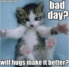 Cat Facts Meme - 21 adorable cats who just want a hug blaze press cats