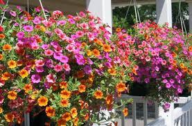 imagenes de jardines pequeños con flores plantas de jardin con flores y sus nombres