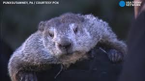 groundhog thursday phil shadow