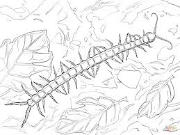 giant centipede coloring page free printable coloring pages