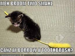 Broom Meme - meh broom two smahl canz ai borrow a toothbrush i can has