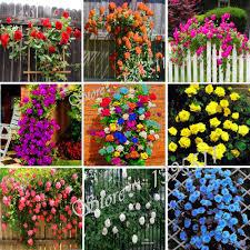 Landscape Flower Garden by Popular Landscape Flower Garden Buy Cheap Landscape Flower Garden