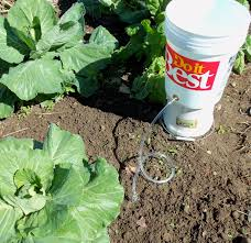 www bucket irrigation com about bucket irrigationand the planet
