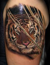 beautiful tiger on shoulder by sazlai tibor