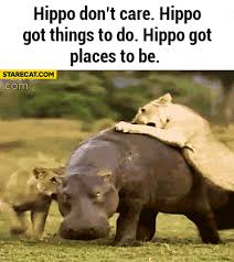 si e social hippopotamus hippo don t care hippo got things to do hippo got places to be lions