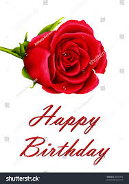 birthday card single red rose stock illustration 76663966