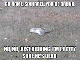 No Just No Meme - 35 very funny squirrel meme pictures and images
