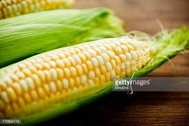 corn on the cob stock photos and pictures getty images