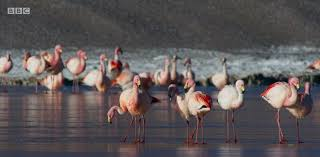 Seeking Planet Series Planet S Earth Ii S Hilarious Flamingo Ballet Shows Birds