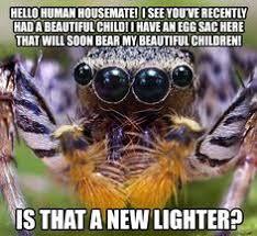 Sad Spider Meme - pin by hanz acosta on wildlife pinterest more wildlife ideas