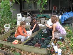 native plant nurseries chronological documentation of the native plant garden at the