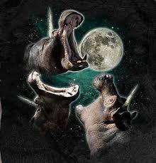 3 Wolf Moon Meme - three cat moon three wolf moon know your meme on 3 wolf moon