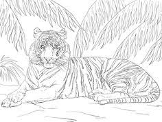 how to draw a tiger cub tiger cub step 9 tiger party