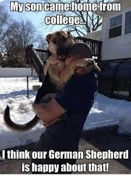 German Shepherd Memes - image result for funny german shepherd memes joans dog collection