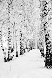 best 25 snow covered trees ideas on snow trees snow