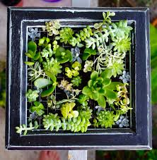Vertical Wall Garden Plants by Turquoise Violets Diy Succulent Wall Garden