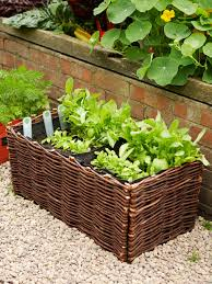 how to grow salad greens in a container hgtv