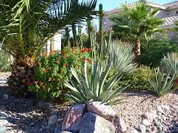 unique desert landscaping ideas home design ideas