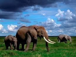 apple wallpaper elephant elephant background pictures hd wallpaper