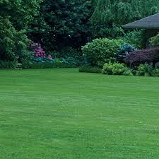 killing weeds with vinegar you bet your garden gardens alive