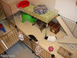 Guinea Pig Cages Walmart C U0026c Diy Guinea Pig Cages