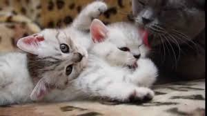 beautiful cats and kittens funny video about kittens and other