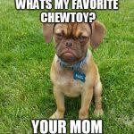Grumpy Dog Meme - grumpy dog meme generator imgflip