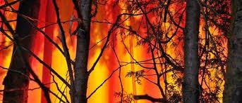 le si e bezpieczeństwo w lesie ośrodek edukacji leśnej cyraneczka