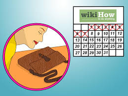 7 ways to remove smell from an old leather bag wikihow
