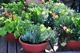 Potted Garden Ideas Container For Vegetable Gardening Patio Vegetable Gardens