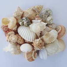 beach home decor ferguson u0027s marine specialties
