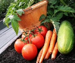 garden planting guide schedule and tips vegetables herbs